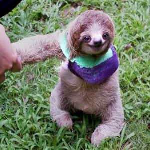_74459962_sloth11