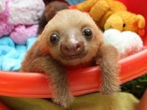 sloth-1-102913
